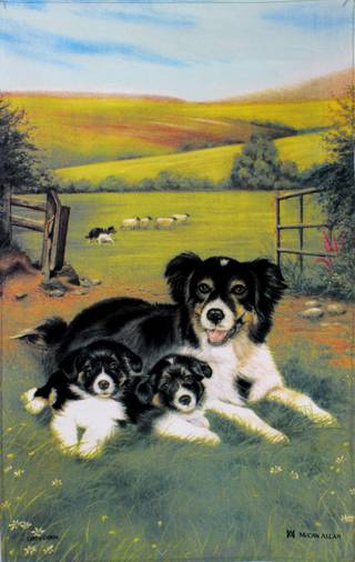 Samuel Lamont 'Sheepdog Collie Pups' tea towel Code : TT-891